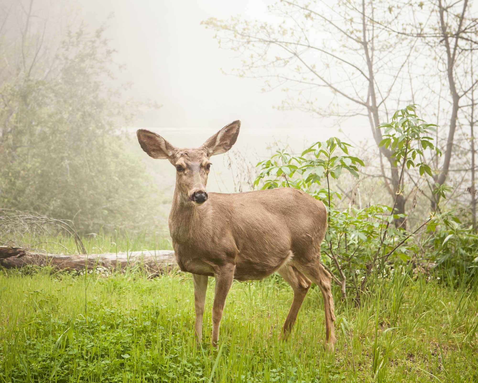 Wildlife-Running-Springs